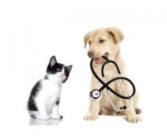 Требуется Администратор в ветеринарную клинику