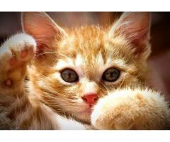 Хороший котенок