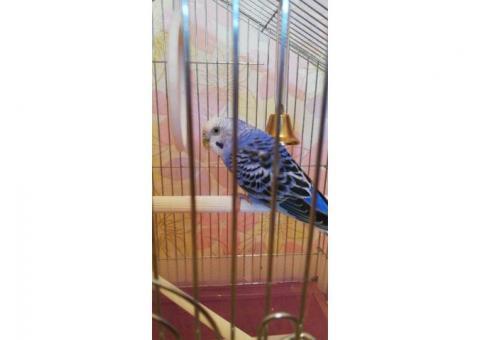 Клетка с попугаем