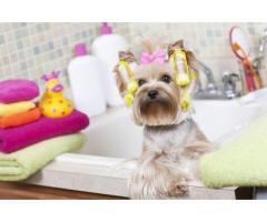 Стрижка ( груминг) собак и котов