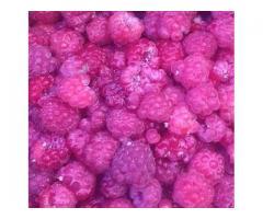 доставка ягод