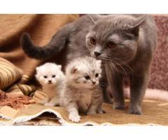 Милые маленькие катятки